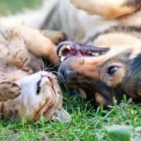 Pour que les questions relatives à la protection animale soient relayées par les médias