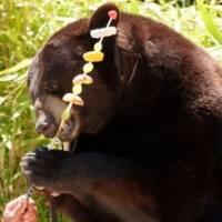 Victoire de la pétition : non au spectacle d'ours à Châteaubleau