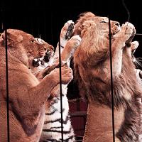 Interdisons les cirques avec animaux !