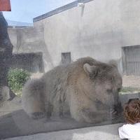 Signez pour que les animaux en enclos vivent dans de meilleures conditions !