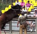 STOP aux spectacles d'ours et de loups à Nigloland