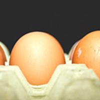 Oeufs contaminés au fipronil : allez-vous réduire ou stopper votre consommation ?