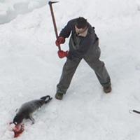 Halte au massacre des phoques au Canada