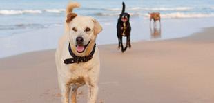 Plus de tolérance pour les chiens sur les plages