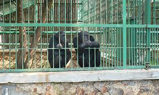 Êtes-vous pour ou contre les zoos ?
