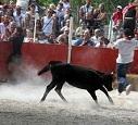 Fête taurine à Collobrières (Var) : STOP ! ça suffit !