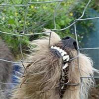 Éxigeons la mise en place d'un numéro d'urgence unique Urgence Maltraitance animaux